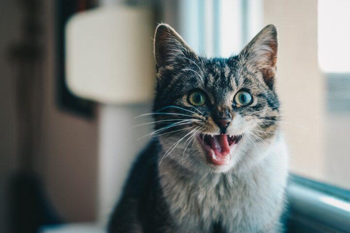 5 dingen die content creators van katten kunnen leren
