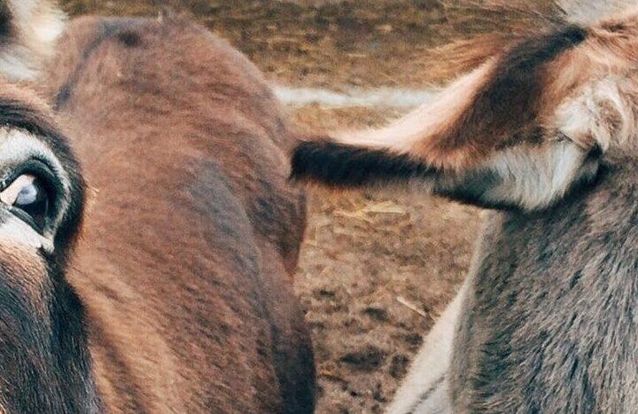 Moeite met spelling? Gebruik deze vier ezelsbruggetjes!
